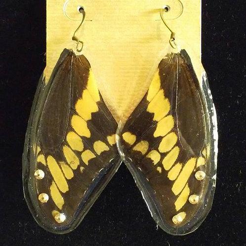 Black Swallowtail (Top-Wings)