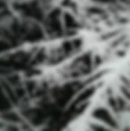 Vinter Odsherred Terapihave