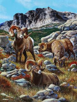 """""""Bighorn Sheep"""""""
