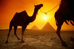 egipto_camellos