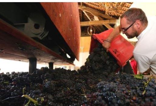 Coronavirus: France's champagne industry goes flat amid pandemic
