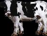 Kırklareli Süt Ürünleri Firmaları