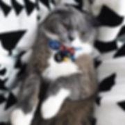 Cat bow tie collar