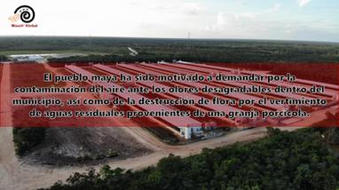 Juzgado Federal concede suspensión de granja porcícola en Chapab