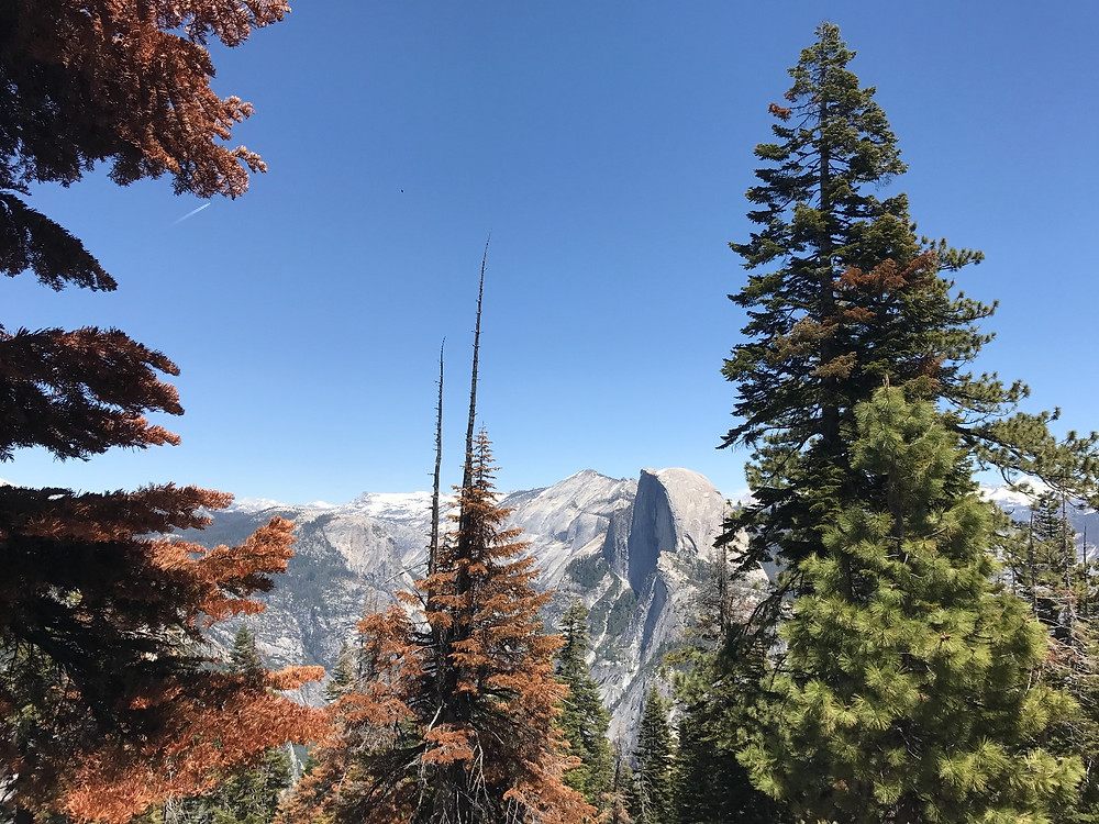 Half Dome from Sentinel Dome Trail
