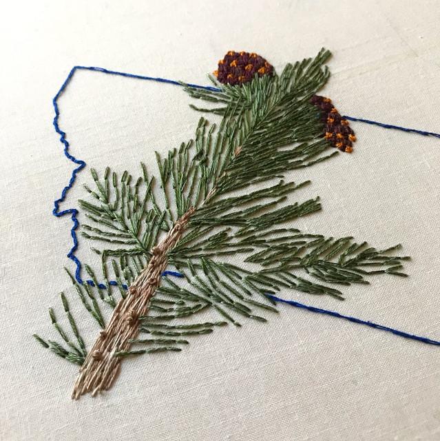 Pinus Albicaulus - ESA SOS Flag Project