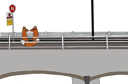 Fox Bandits - Bridge