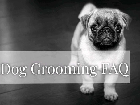 Frequently asked questions about dog grooming