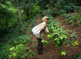 Support Training for Honduran Farmers