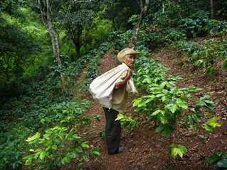 Support Training for Honduran Farmers