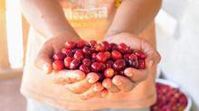 Aldea Development announces new profit-sharing model for coffee purchasing