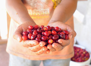Aldea Development announces new profit-sharing model for coffee purchasing