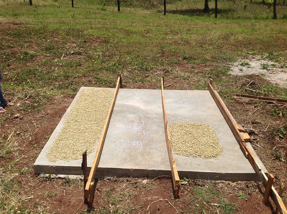 Drying coffee experiment