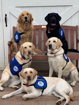 Five-Assistance-Dogs-scaled-940x1253@2x.