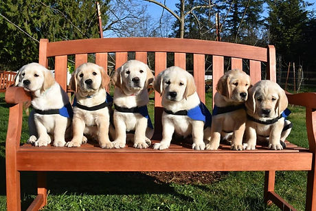 C-litter-on-bench-1024x683.jpg