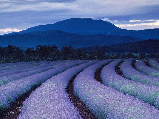 purple-fields-ludwig_1490_990x7421.jpg
