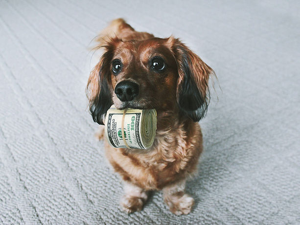 Dog with Money.jpg