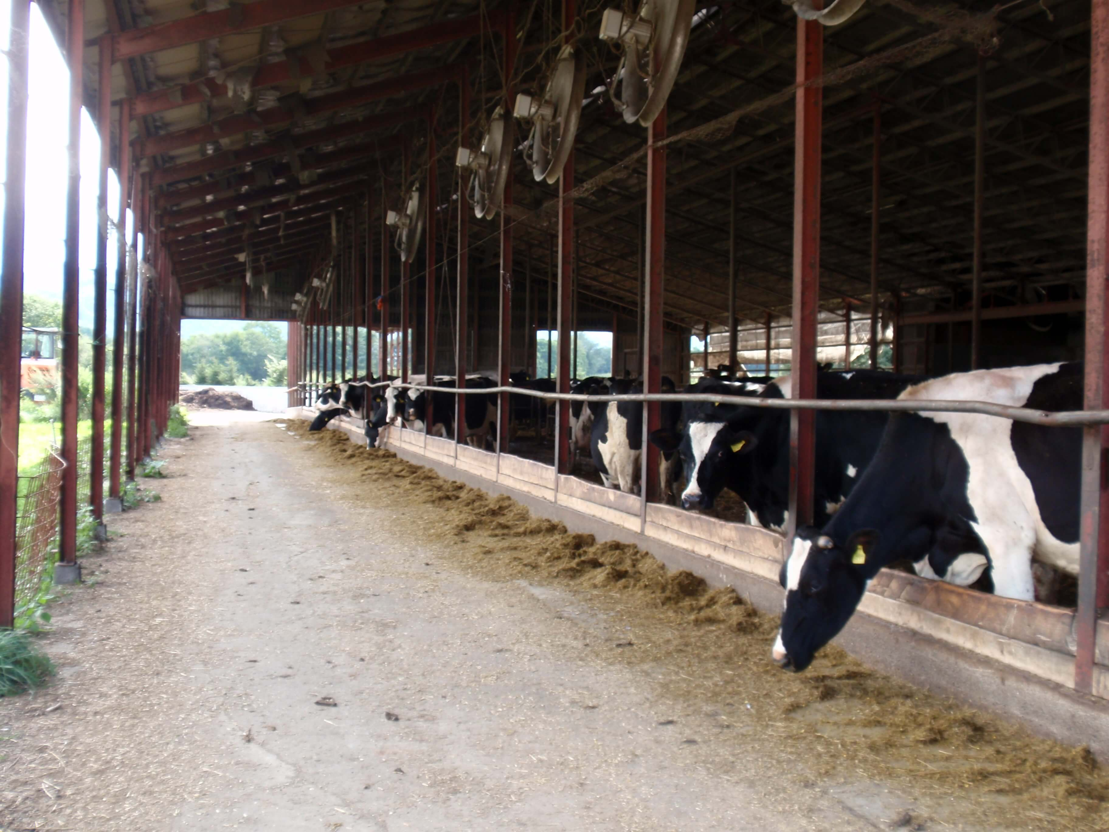 井上牧場牛舎