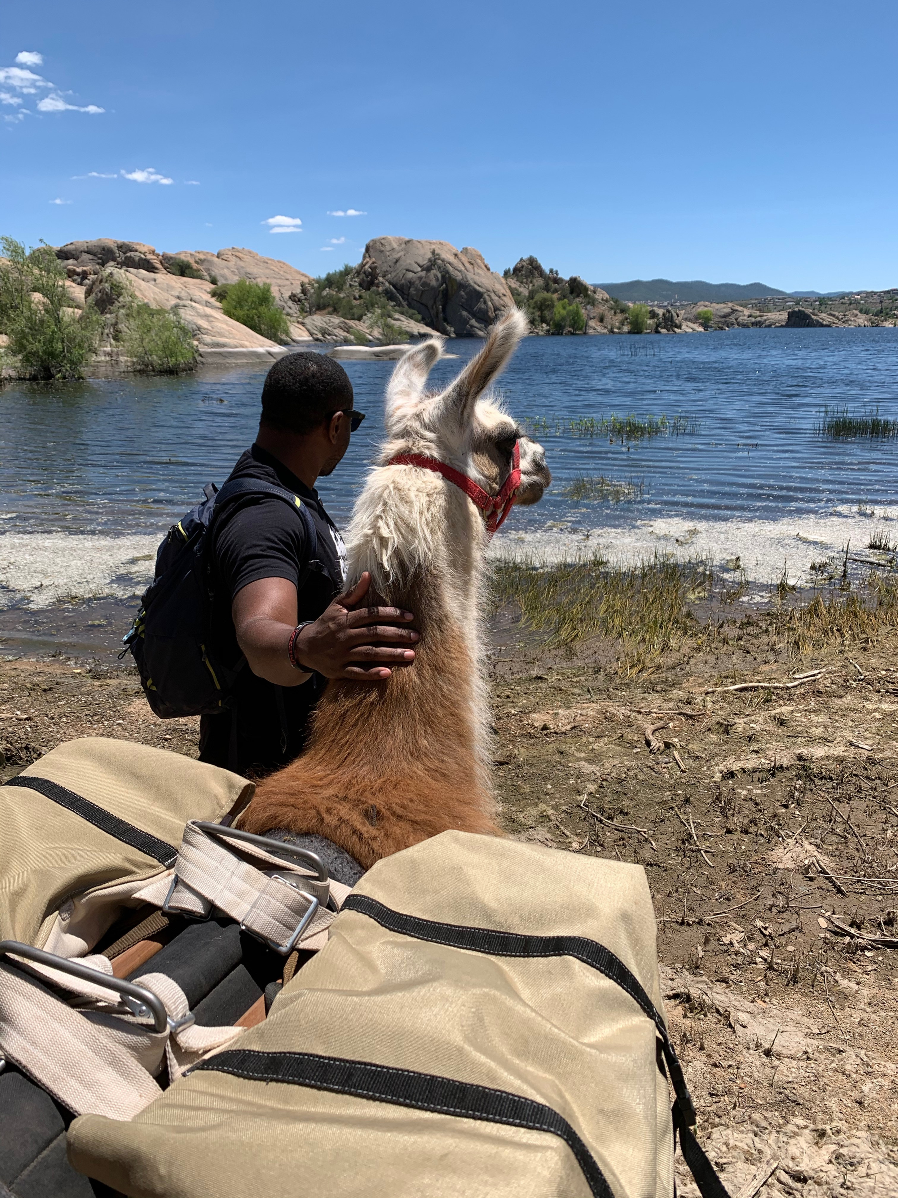 Full Day Llama Hike