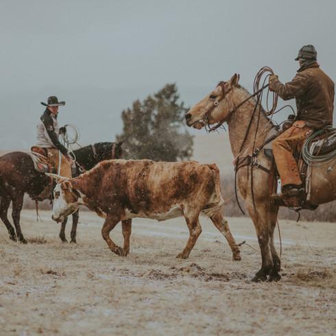 Crowder Ranch Gather
