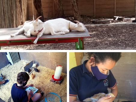 Creating biodynamic awareness through animal therapy