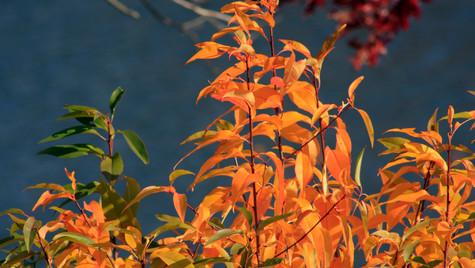Autumn Gold II