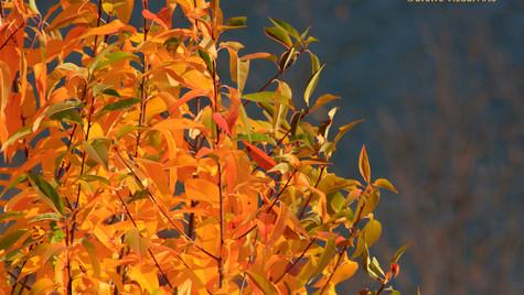 Autumn Gold I