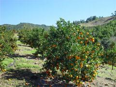 L'avenir de l'agriculture Guadeloupéenne, demande d'un débat au Conseil Régional