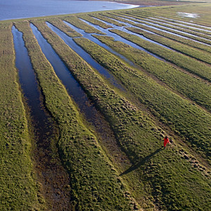 Natuurfotografie: Wadden en Lauwersmeer
