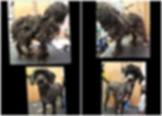 gigi and bella - before and after.jpg