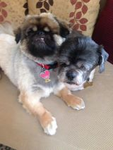 Louie and Rocky (Formerly Nacho)