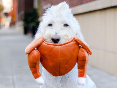DOG FRIENDLY THANKSGIVING