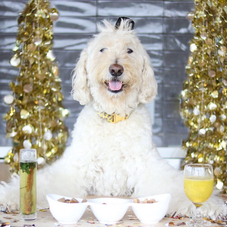 NEW YEAR'S EVE: PUPPY PARTY