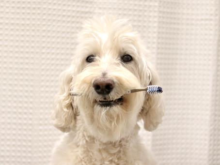 HOMEMADE DOG TOOTHPASTE