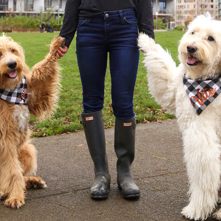 7 TIPS ON ADDING A SECOND DOG