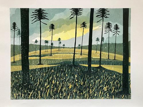 Swinley Sunset II - Jo Boddy