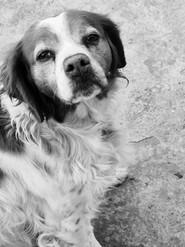 Rares Ionut Popa Turtureanu-FINALIST- Young Photographer - Lisa-my dog
