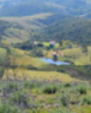 lavender-2809008_1920.jpg