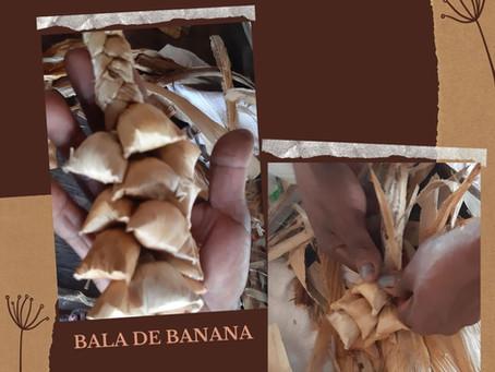 SABORES DA RESISTÊNCIA: As tranças da Bala de Banana