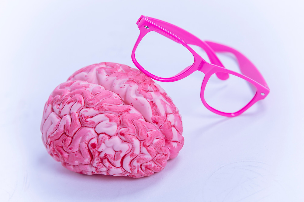 brain; cerveau; perception