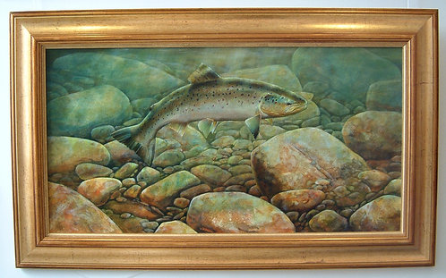 Spey Trout