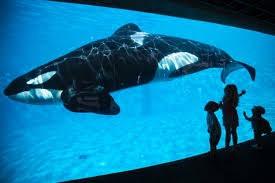 Sea World and Other Animal Abuses