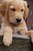 Payton.jpg