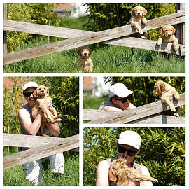 Collage pups in Kleef.jpg