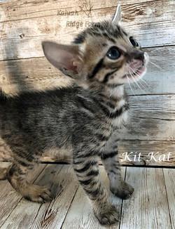 Kit Kat 3.28.21e