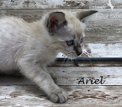 Ariel - Female Snow 8.2.2020a