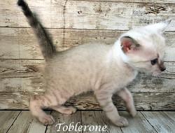 Toblerone 3.28.21c