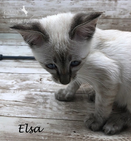 Elsa - Female Snow 8.24.20b