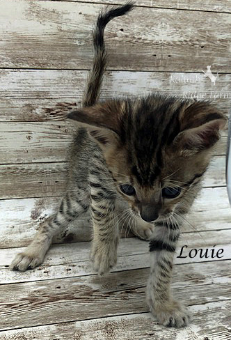 Louie - Male BST 7.16.20c