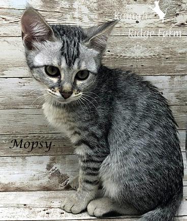 Mopsy - Female Silver 7.16.20b